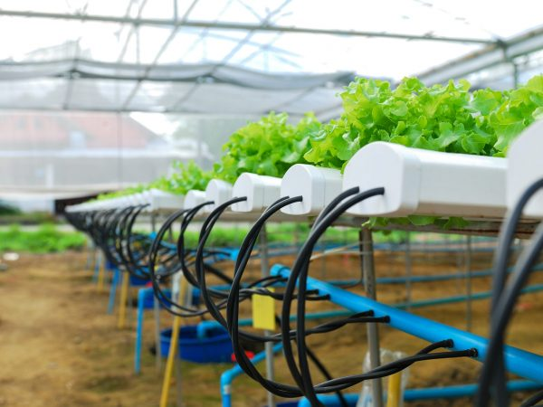 Hydroponics for salad in greenhouse